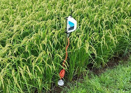 水田の状況をセンサーで把握するPaddyWatch(写真提供:NTTドコモ)