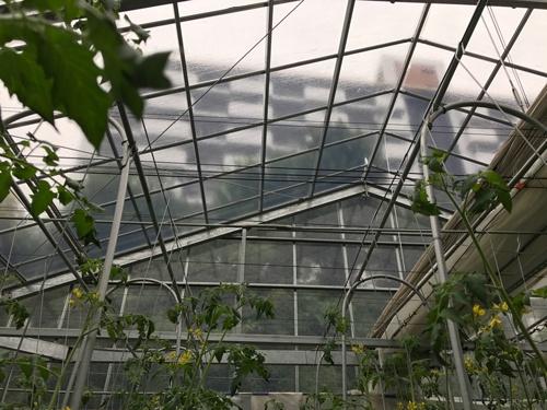 天井の向こうに都営住宅を仰ぎ見る。都市ならではの光景だ(西東京市)