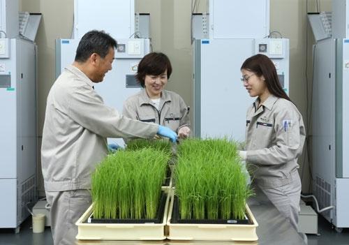 コメの品種開発に取り組む住友化学の研究所(兵庫県宝塚市、写真は住友化学提供)