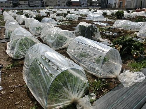 「週1回の農作業」を可能にするアグリメディアのシェア畑
