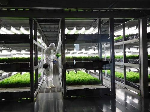 スーパーへの販売に成功したスプレッドの植物工場
