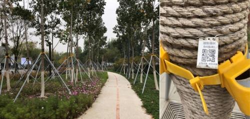 鉄棒で支えられた木々と木々に取り付けられたQRコード