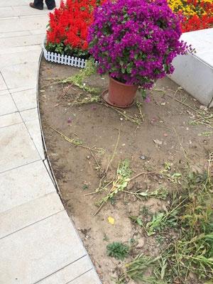 ホテルの花壇