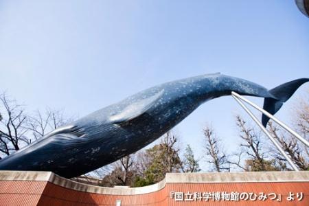 (写真:高岡 弘、以下同)