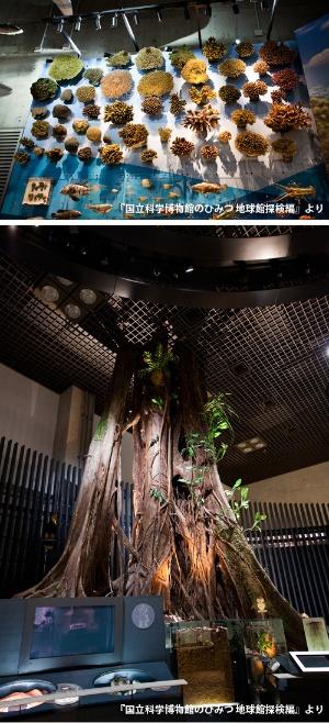 今では採集困難な科博の貴重な標本(1階/サンゴ=上、絞め殺しの木=下)
