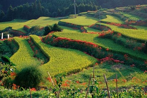 県内のいたるところに「スレてない田舎」「日本の原風景」が広がっているのが佐賀県の魅力。居心地の良い上質な田舎をPRしてタイ人集客を図る。