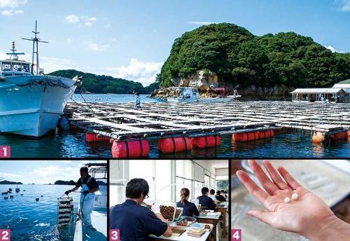 <b>[1]長崎・九十九島の養殖基地。「病院」とも呼ばれ、挿核前、直後のあこや貝が集められる。[2]挿核したあこや貝は、網に入れられ、沖に出される。[3]あこや貝の挿核は「手術」とも呼ばれる。真珠の品質を決める最も重要な工程だ。[4]貝から取り出された直後の真珠。養殖期間が長いほど巻きが厚く輝きは深い</b>(写真=4点:笹山 明浩)