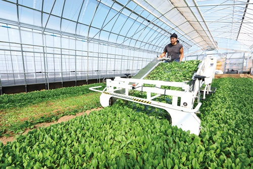 2017年10月に発売した水洗い不要のベビーリーフは、山梨県北杜市の農園で栽培をしている(写真=北山 宏一)
