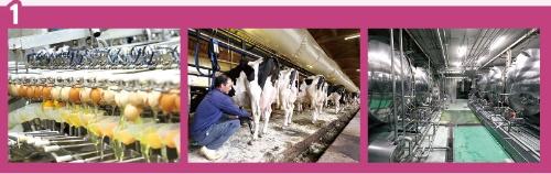 """<span class=""""fontSizeL"""">工場では自動化率を高め、製造コストを削減し菌の繁殖も防ぐ</span><br />●ホールケーキの製造工程"""