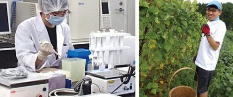 再生医療では医療用医薬品の開発、販売に向けた研究が進む(左)子会社運営の奈良県の農場で 野菜を生産(右)