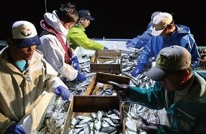 <b>各地の漁港に足を運び、作業も手伝いながら漁師と信頼関係を築く(左から2人目が野本社長)</b>