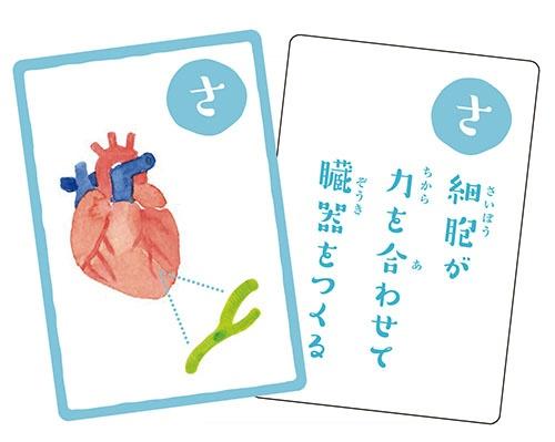 """毎回、冒頭で、京都大学iPS細胞研究所制作の「幹細胞かるた」をご紹介。 <a href=""""./?P=4#section1"""">最後で</a>解説しています。"""