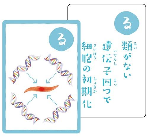 """京都大学iPS細胞研究所制作の「幹細胞かるた」。最後で<a href=""""./?P=5#section1"""">解説</a>しています。"""