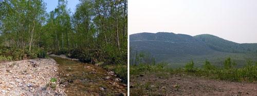 源流がある土地の例。面積は120万坪でミズナラ(高級な建築材になる)が植林されている。30年後に伐採が可能で、その価値から9500万円の価格で売りに出されている