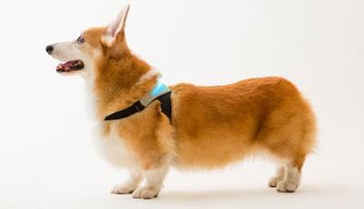 犬の感情によって色が変化する