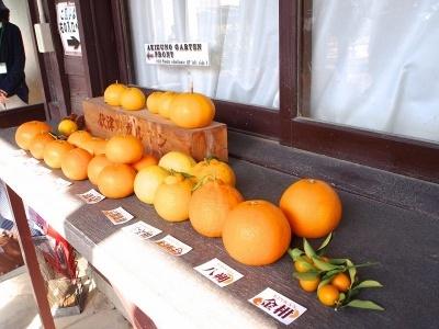 1年を通して柑橘栽培が盛んな地域で、温州みかんだけでなく、キンカン、ポンカン、バレンシアオレンジなど80種類以上のみかんを収穫できる