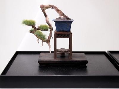 これは「盆栽ー参ー」。見事な懸崖樹(けんがいじゅ)だ