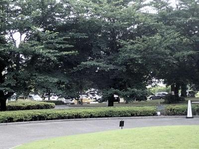 周囲は緑が多く、近隣の建物との間に敷居を設けず、開放的なムード