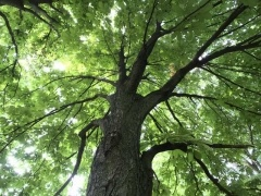 ExoLens ワイドアングルレンズなら気になった大木もシャープかつきれいに写せる