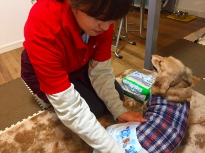 一人暮らしの女性の飼い主も多いため、女性の動物看護師に限定しているという。基本料金は30分2000円~(エリアによって異なる)