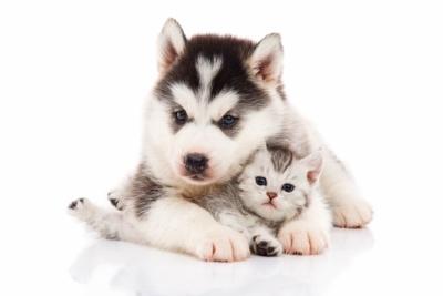 ペットフード協会によると、家庭での飼育数は犬が2008年に約1310万頭、猫が約1089万頭だったが、2017年は犬が約892万頭、猫が952万頭と減少している(写真:Anurak / PIXTA)