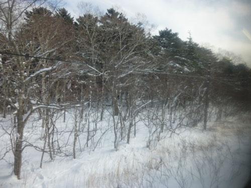 原生林を進む