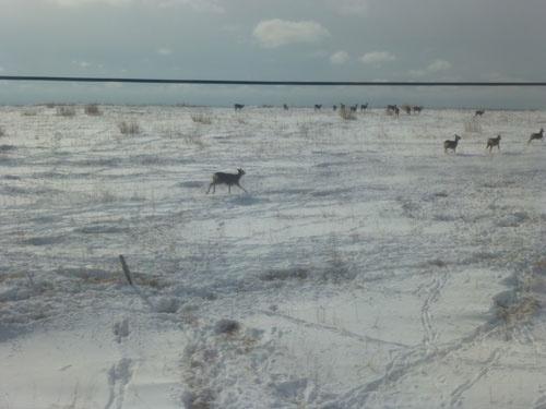 雪の平原を走るエゾシカ