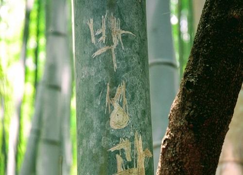 ナイフで傷つけられたとみられる竹