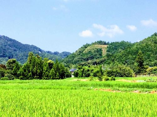 嵯峨野では「鳥居型」が灯る。松明の数は108つ