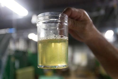 プランクトンの一種、ワムシ。クロレラと栄養強化剤を合わせて稚魚に与える。