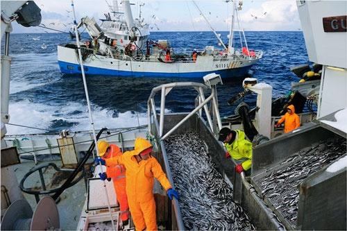機械化が進むノルウェーの多くの漁船には、機器のメンテナンスを担当するエンジニアが乗船している。(写真:Johan Wildhagen)