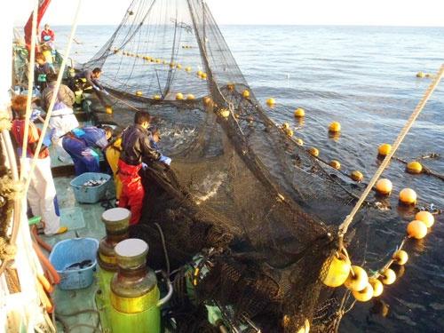 マグロの定置網への混獲で、日本は漁獲枠を超過してしまった