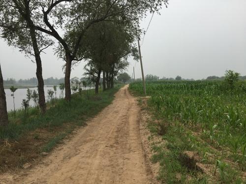 汚染された池のすぐ横には畑が広がっている