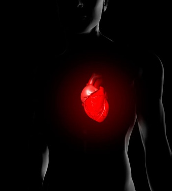最新技術は「止まらない心臓」さえも生み出そうとしている…(提供:imagebroker/アフロ)