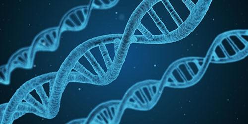 遺伝子解析の成果が医薬や農業だけでなく、さまざまな産業に生かされ始めた