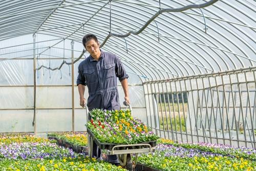 大野夏也選手は、毎日近隣の農家で作業をしながら、苗作りの基本を学んでいる<br />(写真=諸石 信)