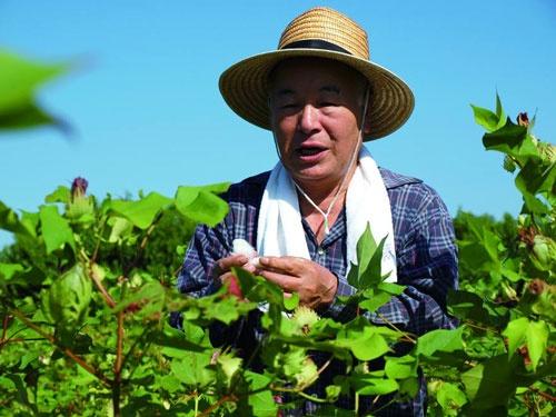 タビオでは2009年から靴下を編む糸の材料である綿の研究のため、奈良県広陵町で綿花の栽培に取り組む。毎年、綿花摘み大会を実施し、越智会長も参加する