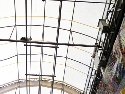 赤羽のアーケード街の天井では、猫たちがお昼寝中でした。
