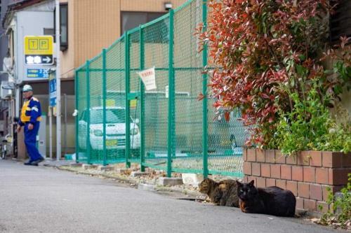 のちに虎ノ門ヒルズレジデンシャルタワーとなる場所にうずくまっていた2匹の猫(写真:荻窪圭、以下同じ)