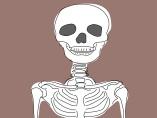 ニンゲンも最期は骨になる