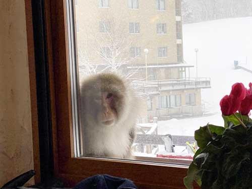 グリーン名物のカニクリームコロッケを食べていたら、外からお猿さんが覗いていました。レストランの中には何人も人がいるのに、ずっと私を見ているんですよ。仲間と思われたのでしょうか……。