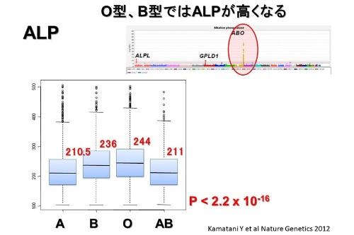 """肝臓や胆のうなどの病気の指標とされるALP値と関連する遺伝子を調べたところ、血液型を決定するABO遺伝子が最も強い関連を示し、A型、AB型に比べ、特にO型では30以上値が高くなることが分った。つまりO型では、特に病気がなくても異常値となる可能性が高くなると想定される。""""P""""は結果が統計上、有意かどうか判断する指標のひとつで、小さいほど有意と判断される。(画像提供:松田浩一)"""