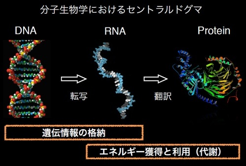 Proteinはタンパク質。(画像提供:藤島皓介)