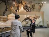 恐竜絶滅の謎を解く鍵と、その意味とは