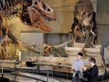 日本の恐竜文化が変貌した、ほぼ平成30年史