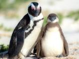 中央銀行の世界に「白サギ」が登場、脱「ペンギン」願望も?