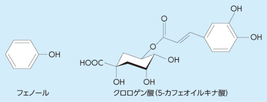 クロロゲン酸には、複数の形態がある。上図の右側はクロロゲン酸の1つ「5-カフェオイルキナ酸」。なお、ポリフェノールとは、フェノール(図の左側)が複数結合した化合物の総称。